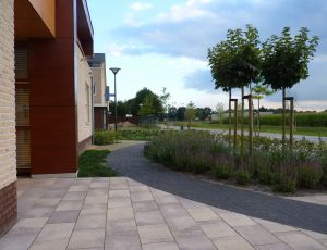 aanleg-moderne-tuin-heesch